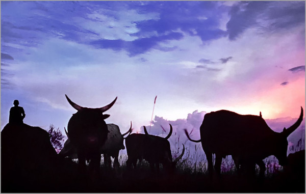 Crépuscule sur les collines rwandaises, Alain Muzet