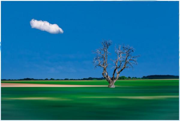 Un arbre, Fabienne Benard-Flouret