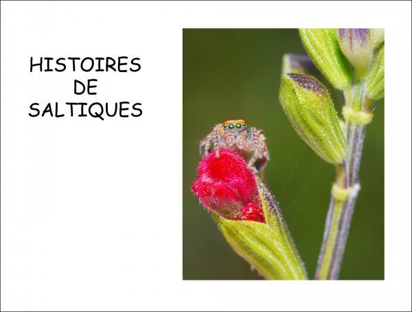 Histoires de Saltiques, premier prix livre auteur de Didier Von Tillmann