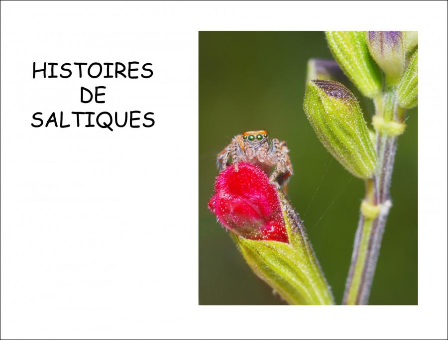 """Interview à propos du livre """"Histoires de Saltiques"""""""