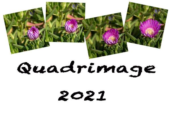 Quadrimage 2021