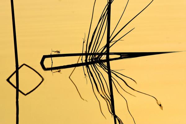Reflets - C. Sicard